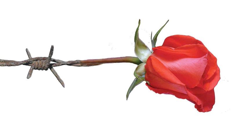 rosa70anni