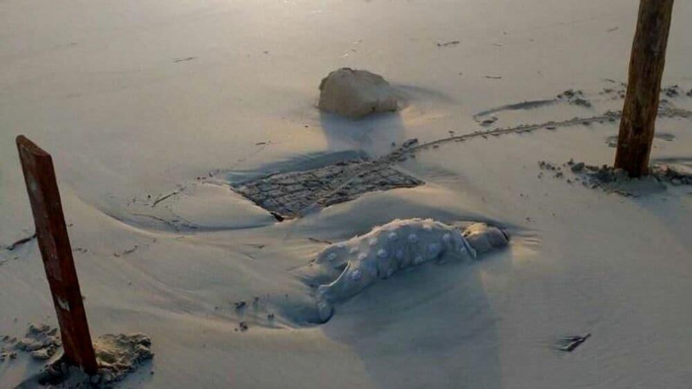 bambini-spiaggia-zuwara-libia-2