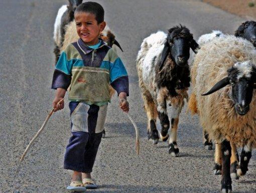 Siria, oltre alla guerra la siccità. Contadini in pericolo